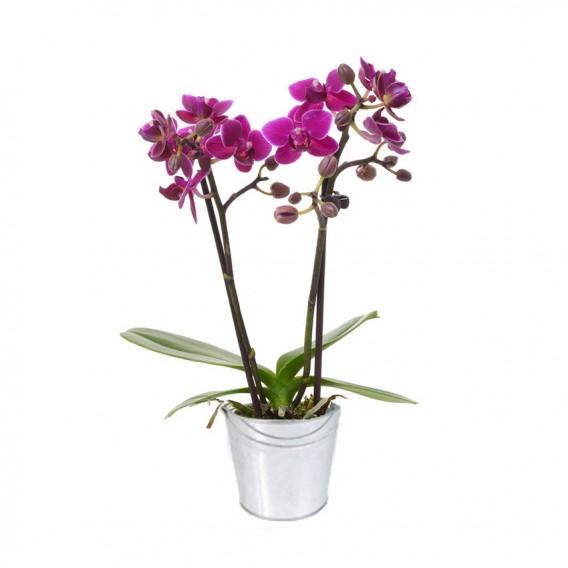 livraison fleurs orchidée