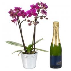livraison orchidée champagne