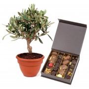Olivier et chocolats