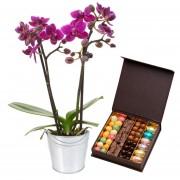 Orchidée et chocolats de Pâques