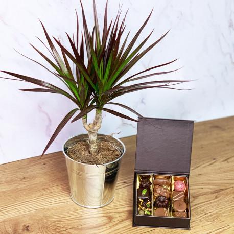Chocolats et plante