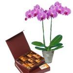 Fleurs et chocolats selon vos envies