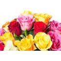 Fleurs & Cadeaux