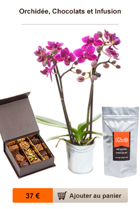 orchidee chocolat infusion