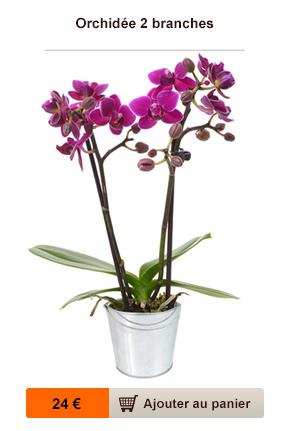 livraison orchidee fleurs